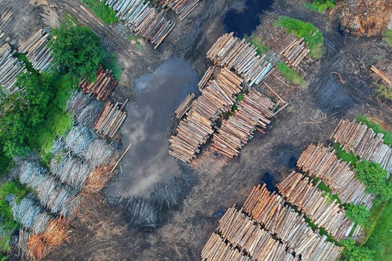 animal diet deforestation