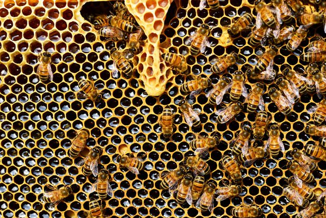 several bees in beehive with honey and honeycomb